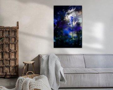 Magical Hyacinth