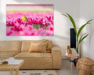 Tulpen | Gelbe Bachstelze in einem bunten holländischen Tulpenfeld von Servan Ott