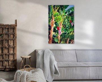 Palmier bananier tropical dans la jungle sur Jacob von Sternberg