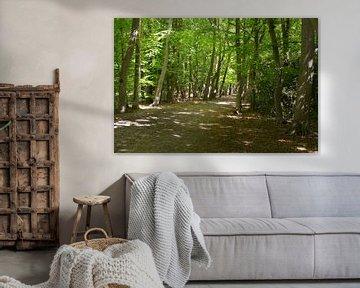 Chemin avec des arbres aux jeunes feuilles vert clair dans la forêt sur Gerrit Pluister
