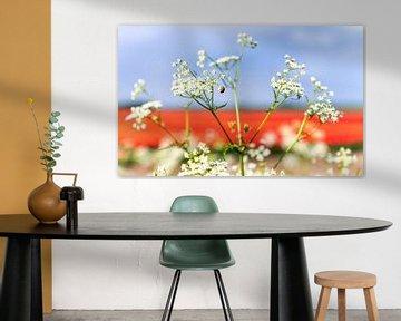 Rouge, blanc et bleu dans la nature 1 sur Anouschka Hendriks