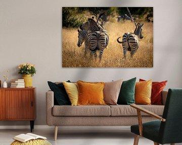 Zebras im Krüger-Nationalpark von Andreas Jansen