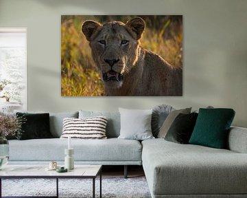 Nahaufnahme eines Löwen von Andreas Jansen