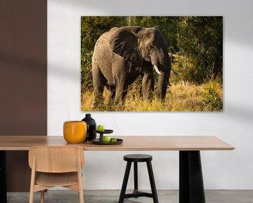 Elefant Sonnenuntergang von Andreas Jansen