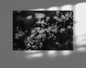 Kuh Petersilie in schwarz und weiß von Holly Klein Oonk