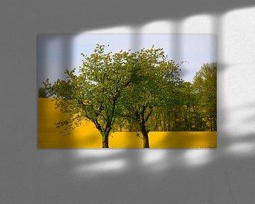 Bäume vor Rapsfeld von Thomas Jäger