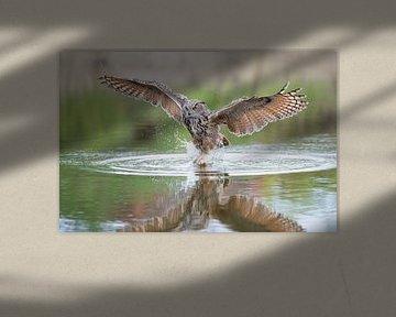 Eule beim Fischen nach Beute. von Larissa Rand