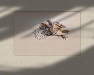 Oehoe in vlucht van Larissa Rand