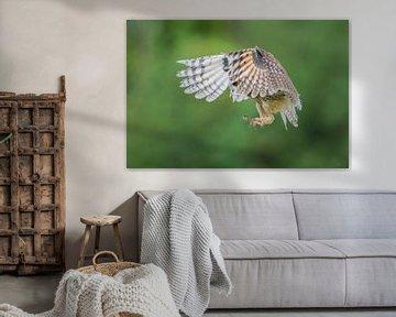 Waldohreule schaut durch Federn von Larissa Rand