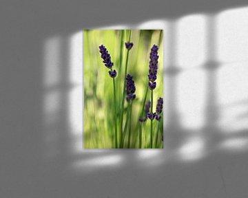 Lavendel von Anja B. Schäfer
