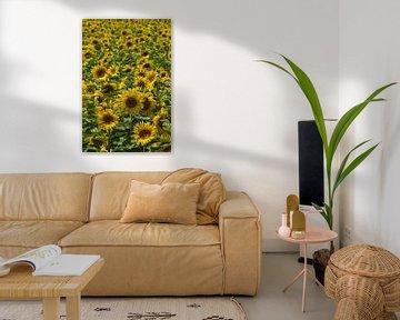 Sonnenblumenfeld von Anja B. Schäfer