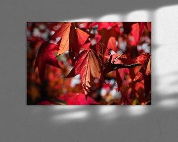 Blätter in der Herbstsonne von Anja B. Schäfer