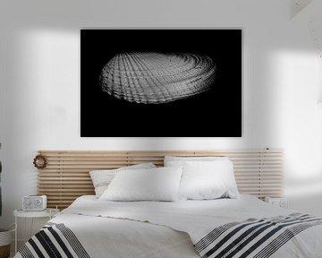 Witte boormosselschelp hoog contrast