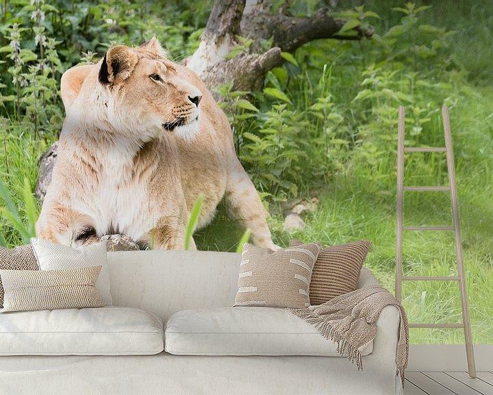 Beispiel fototapete: Löwen auf Safari Beekse Bergen von Anne Zwagers