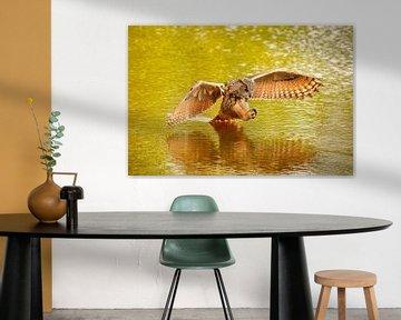 Een  gedetailleerde Oehoe, de roofvogel vliegt met uitgespreide vleugels  en staart in het water. bo van Gea Veenstra