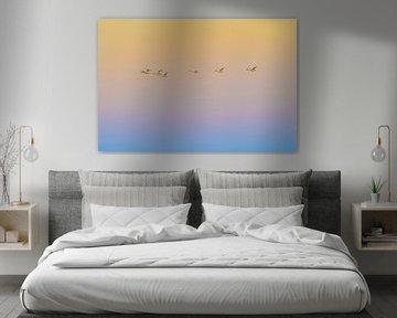 coucher de soleil vol, Rob Li sur 1x
