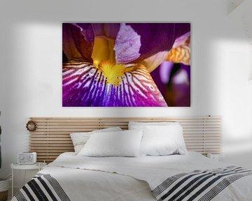 Feuerwerk der natürlichen Farben - Iris, Heike Jess von 1x