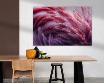 Flamingo, Angyalosi Beata van 1x