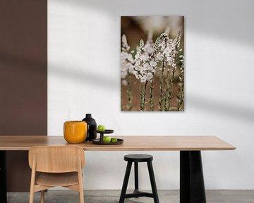 Weiße Blumen von Tessa Dommerholt