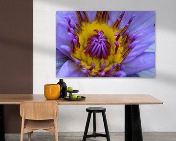 Thaise lotus von Studio Zwartlicht