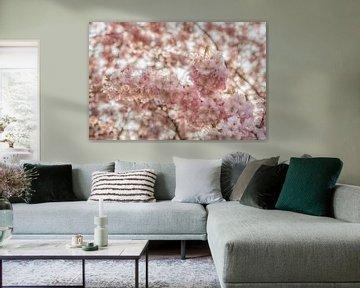 Tak met roze bloesem van Moetwil en van Dijk - Fotografie