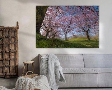 Prunus bomen van Moetwil en van Dijk - Fotografie