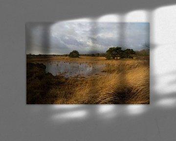 Wetlands on Oude Buisse Heide von Ron A.B.