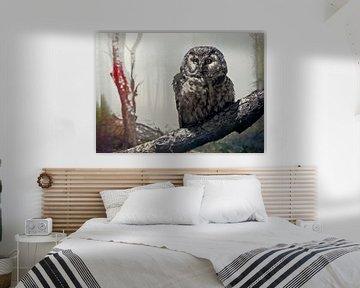 The owl place van Rudy & Gisela Schlechter