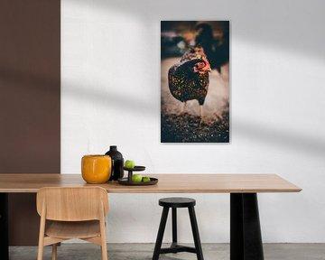 Huhn von Bjorn Brekelmans