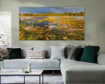 Avondlicht in Nationaal Park het Dwingelderveld van Henk Meijer Photography
