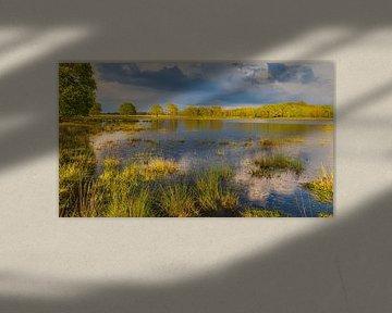 Avondlicht in Nationaal Park Dwingelderveld