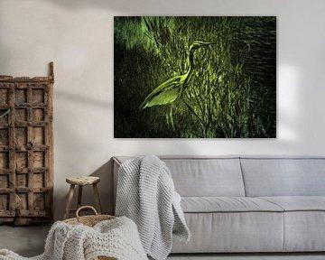 Grünreiher von Ted Sluymer