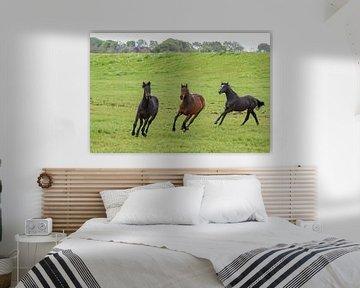 Drei Pferde / Three horses von Henk de Boer