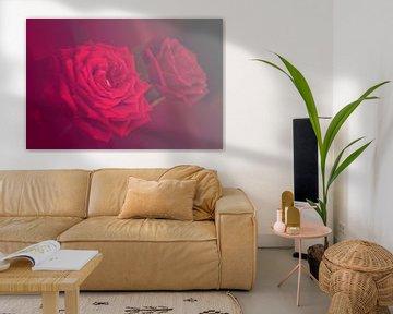 Rote Rosen von Roswitha Lorz