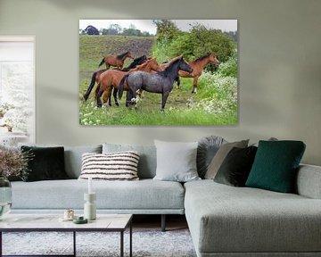Paarden / Horses van Henk de Boer
