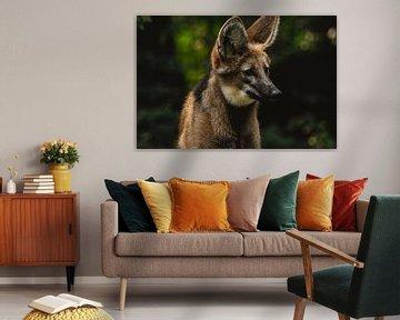 Wildhund von Lars Hoppe