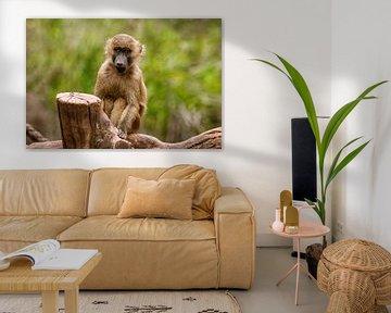 Baby Affe von Lars Hoppe