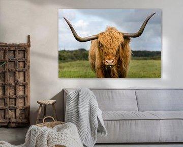 Schotse Hooglander portret van Richard Guijt Photography