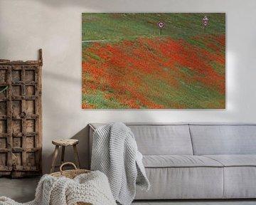 Rood tapijt van klaprozen langs de snelweg. von Gert van Santen
