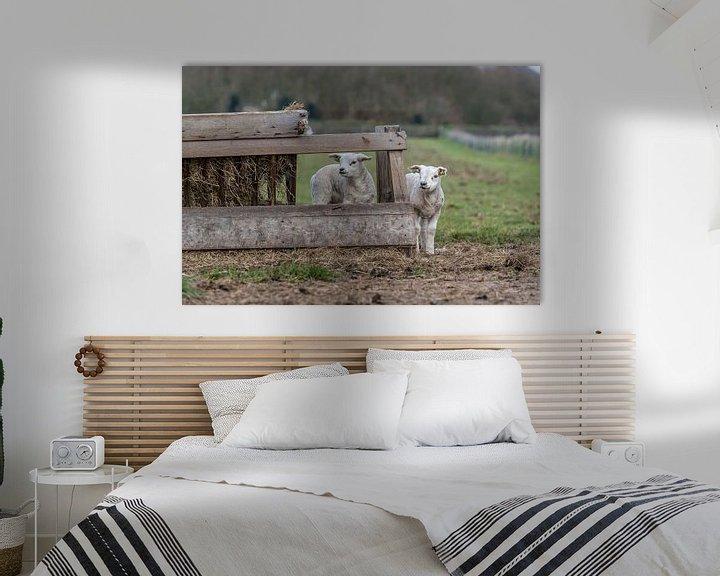Impression: Petits agneaux coquins - Texel sur Texel360Fotografie Richard Heerschap