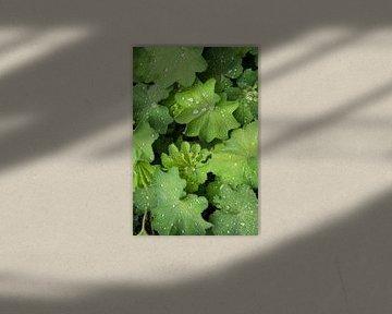 Tropfen auf grünem Blatt von Studio Maria Hylarides