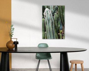 Kaktus-Kollektion in verschiedenen Grüntönen. von Studio Maria Hylarides