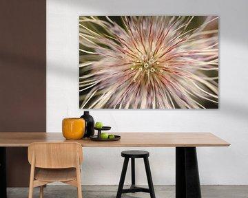 bloem met dauwdruppels van Sandra Hogenes