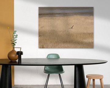Roofvogel de Bruine Kiekendief Scheert over het Riet bij Kwade Hoek - Schilderij