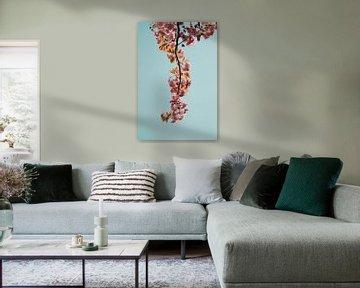 Ein Zweig mit rosa Blüte vor blauem Himmel von Robin van Steen