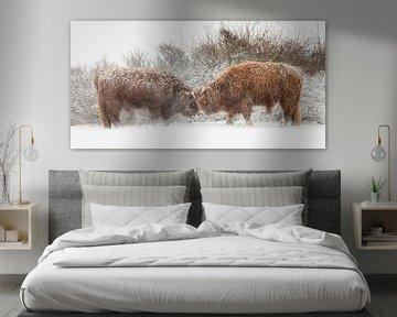 """Schotse hooglanders """"stand off"""" in de sneeuw van Richard Guijt Photography"""