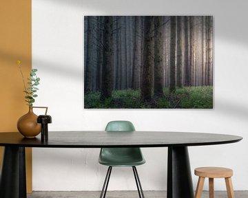 Diep in het bos van Marche-en-Famenne van Peschen Photography
