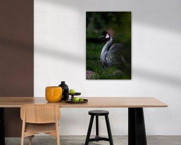 Gebogener Hals eines gekrönten Kranichs auf dunkelgrünem Hintergrund Afrikanischer Vogel im Profil von Michael Semenov