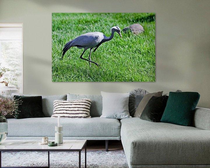 Sfeerimpressie: demoiselle kraanvogel op groen gras is sierlijke vogel verzadigde kleuren groen en blauwachtigKraanv van Michael Semenov