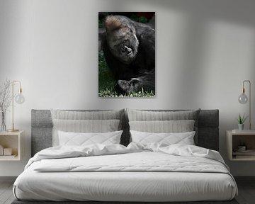 Die fragende Düsternis eines dominanten männlichen Gorillas auf einer grünen Wiese, die an ein Verhö von Michael Semenov